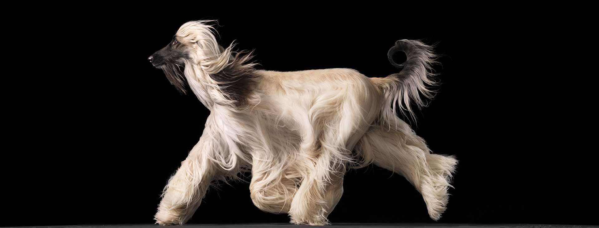 showdog.gr