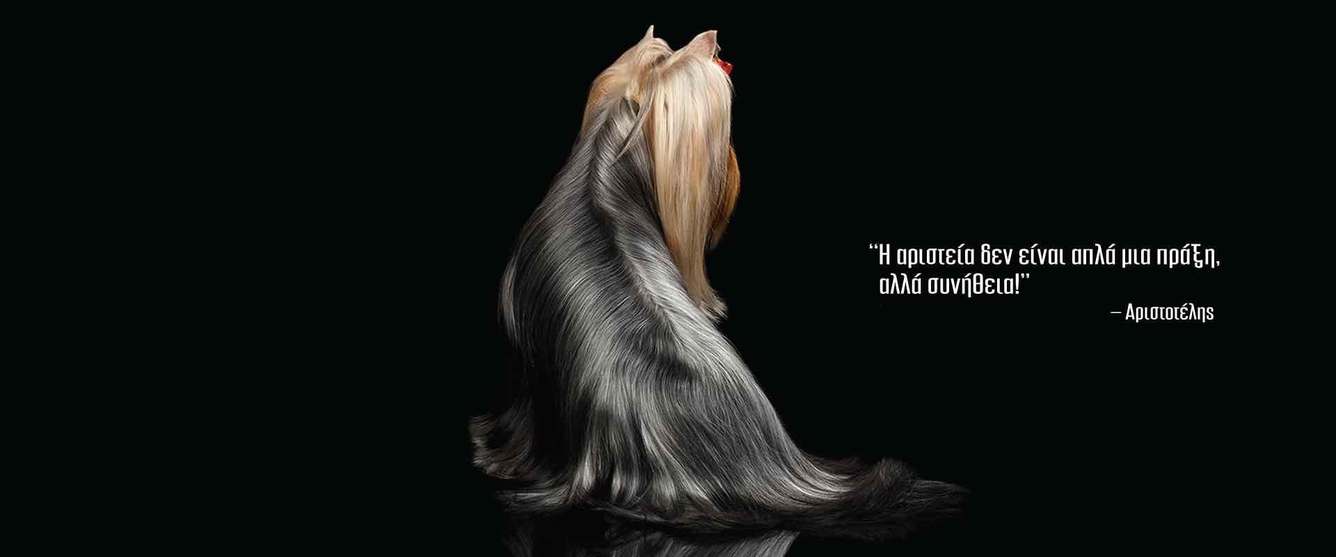 showdog.gr - Εκθεσιακά προϊόντα σκύλου - Η ποιότητα δεν είναι απλά μια πράξη. Είναι συνήθεια - Αριστοτέλης
